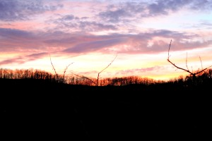 Sunset in a Virginia Orchard